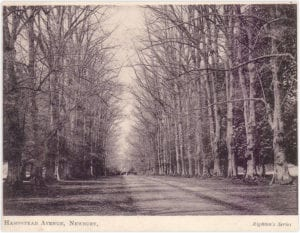 Grand limes avenue leading to Hamstead Lodge, felled in the 1950s replaced with chestnuts